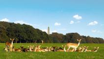 Ciervos en Phoenix park, imagen de cityscapetours
